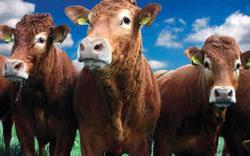 Situación de la producción cárnica y láctea argentina