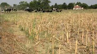 Impactos sociales y económicos de la sequía