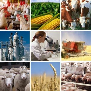 Política agroalimentaria y agroindustrial. Lineamientos 2016-2019